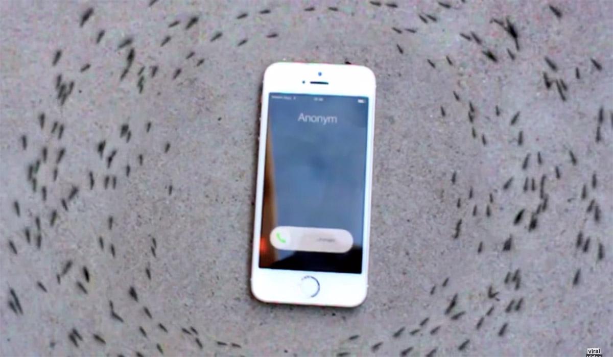 video semut mengelilingi iphone